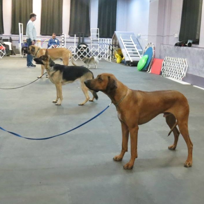 competition-obedience-class.jpg