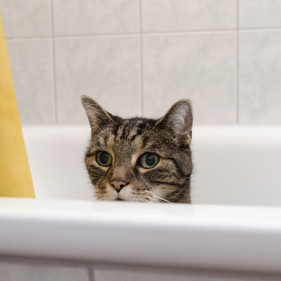 Cat sitting in bathtub by Flickr user J. Triepke