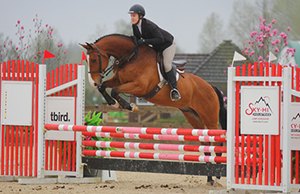 Quantico 2004 Warmblood -  SOLD