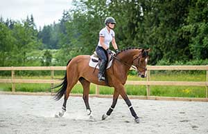 Fiona 2007 Warmblood -  SOLD