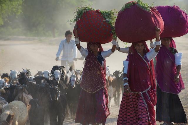 Jawai, Rajasthan
