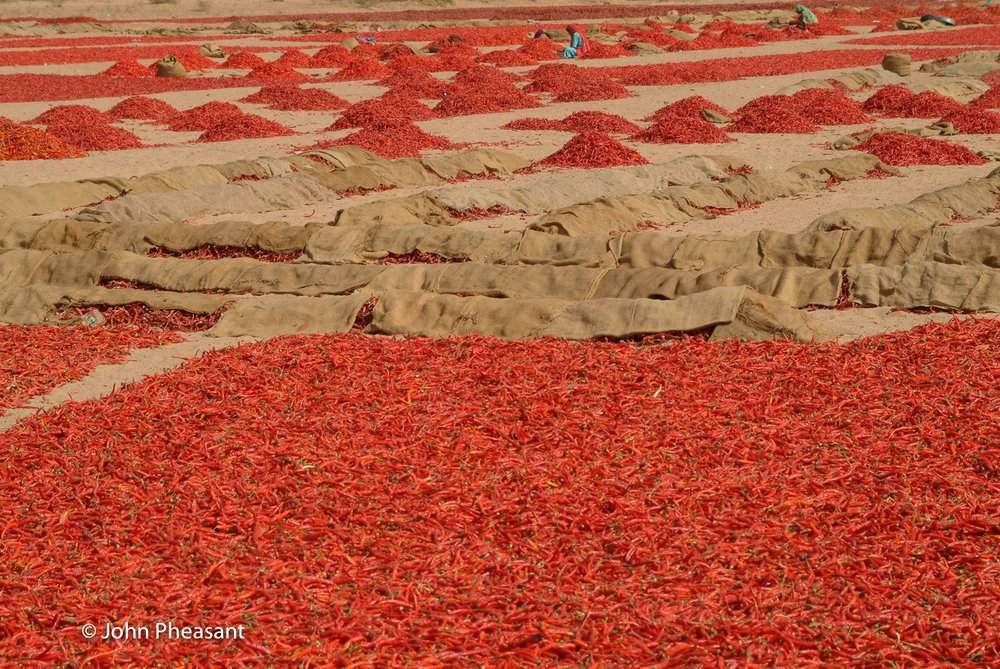 Drying chillies