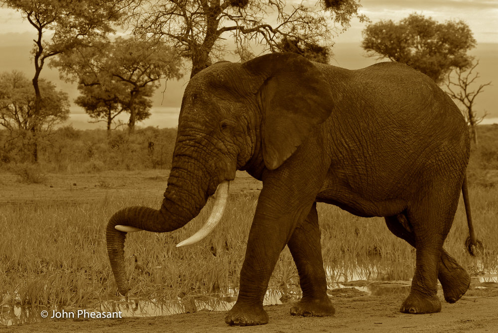 Wildlife_SS-8.jpg