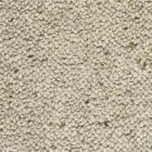 Chelha Sand