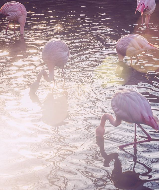 Take it to the tropics! Our first series features fancy flamingos. Tap the link in our bio to find kits for artists and kids (ages 3+)! 🌸#parallelogramming