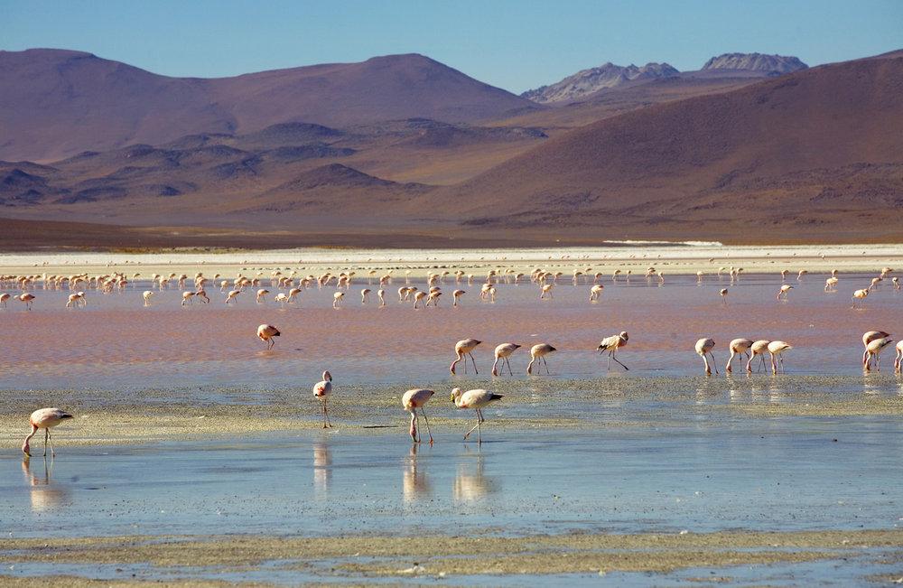 Bolivia_005.jpg