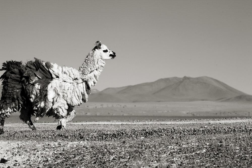 Bolivia_006.jpg