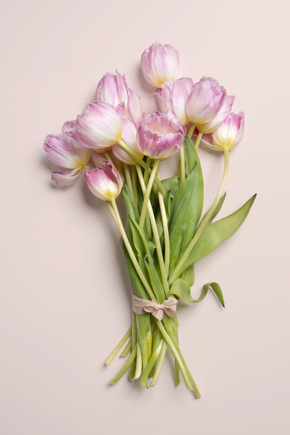 Pink Tulips on P Bckgr.jpg