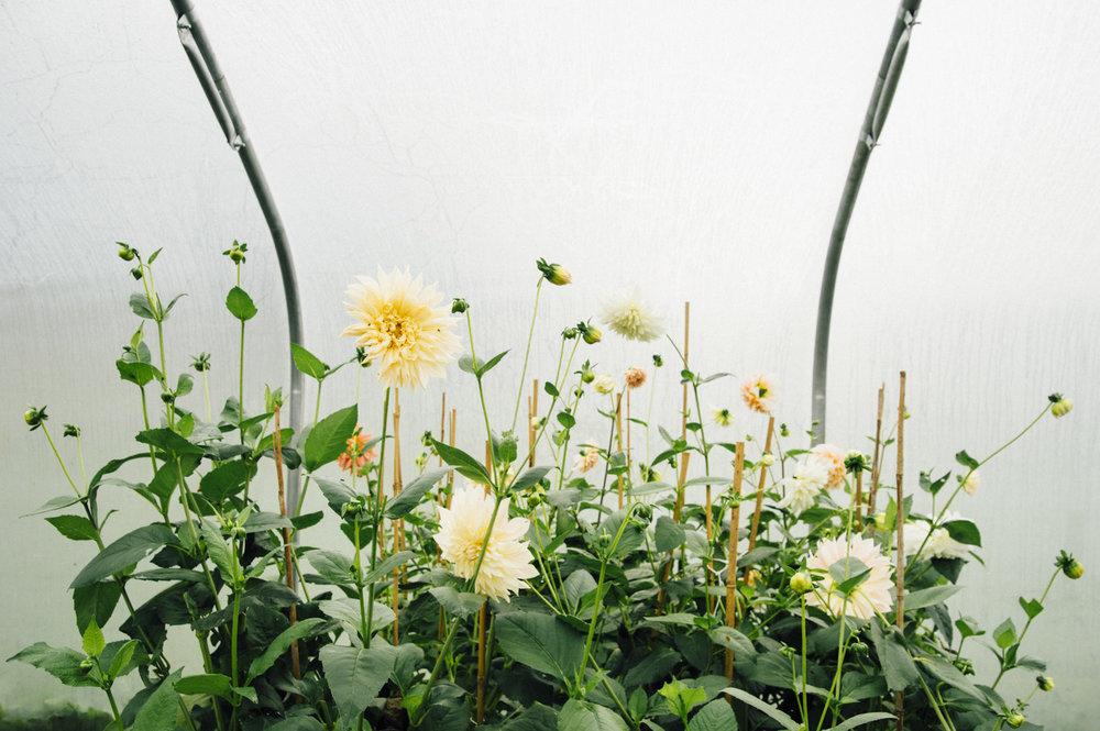 http://pyrusbotanicals.com/home1/#/garden/