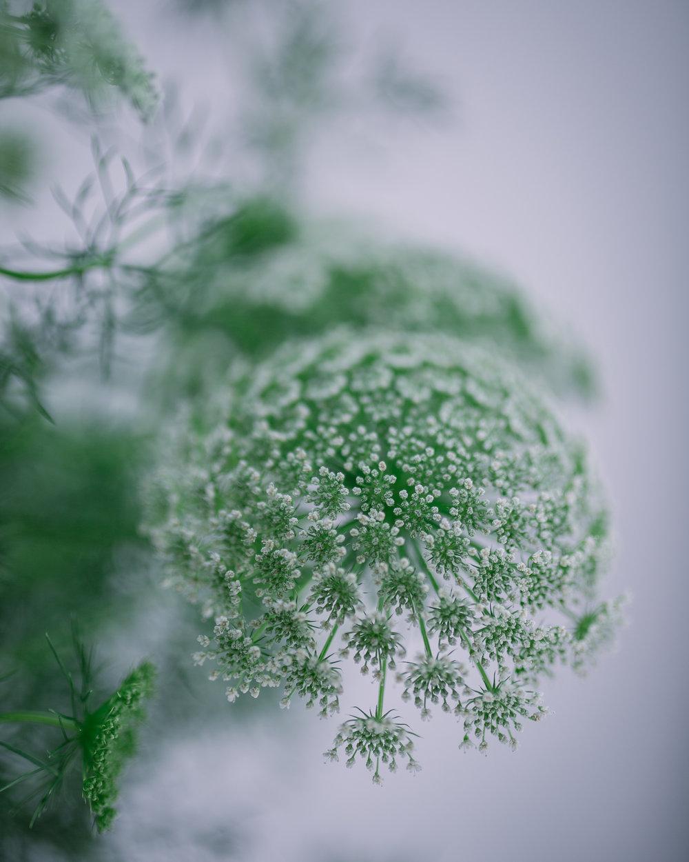 Ammi Rona Wheeldon Flowerona-1.jpg