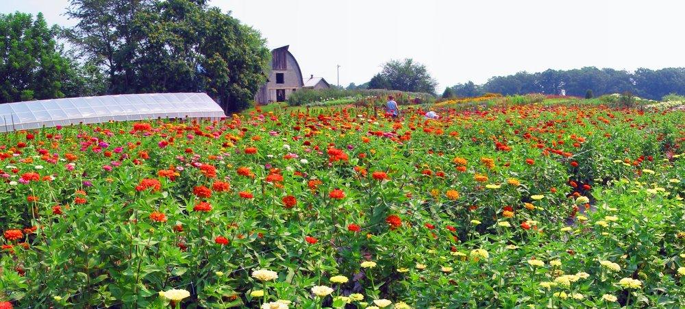 Lou Gagnon - Lou Gagnon- Farm View 5.jpg