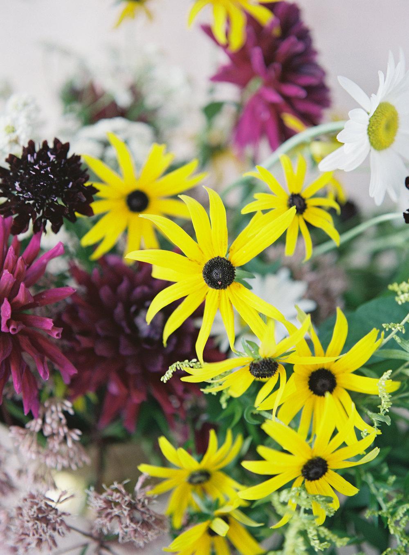 plantspiritmedicineclt6.jpg
