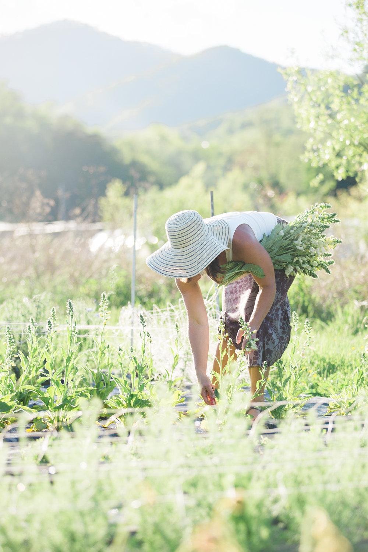 Meghan Rolfe Photography1.jpg