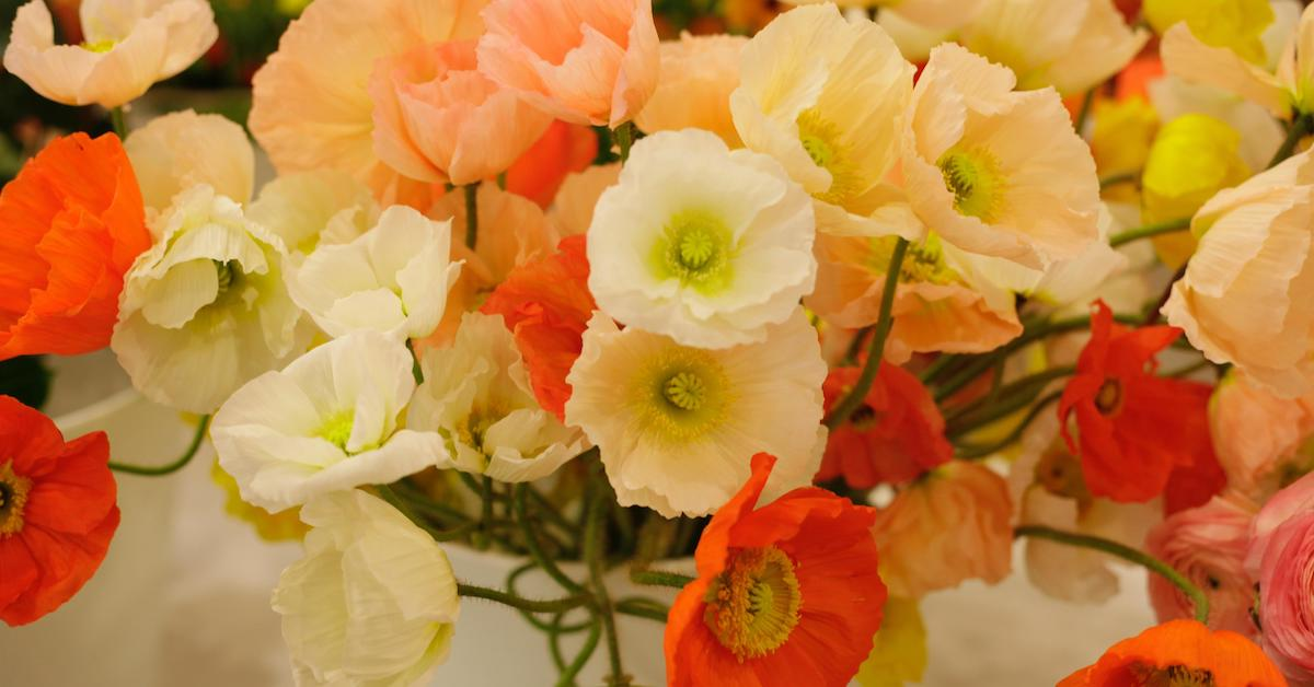 Growing and arranging with poppies from team flower fast flower video poppies maidenhair fern spirea and kumquats mightylinksfo