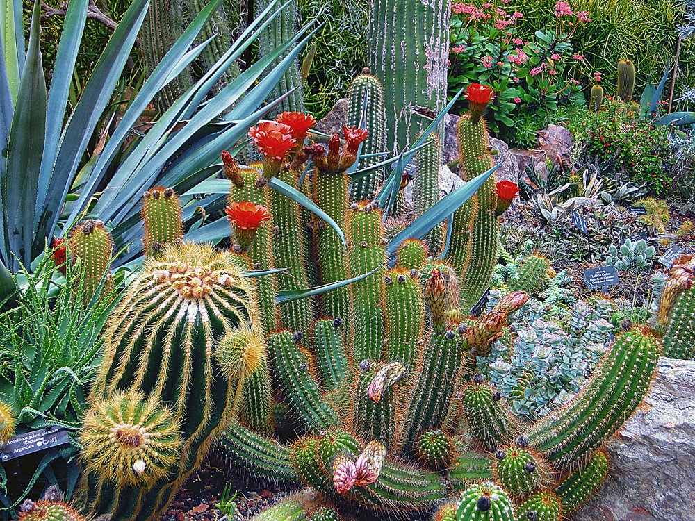 Desert Gardens That Impress — LuxLivingAZ