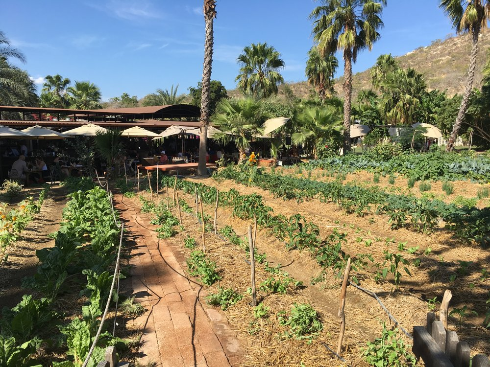 Eliza Wendel Feed the Dietitian | Being Healthy and Exercise on Vacation in Cabo Flora Farms