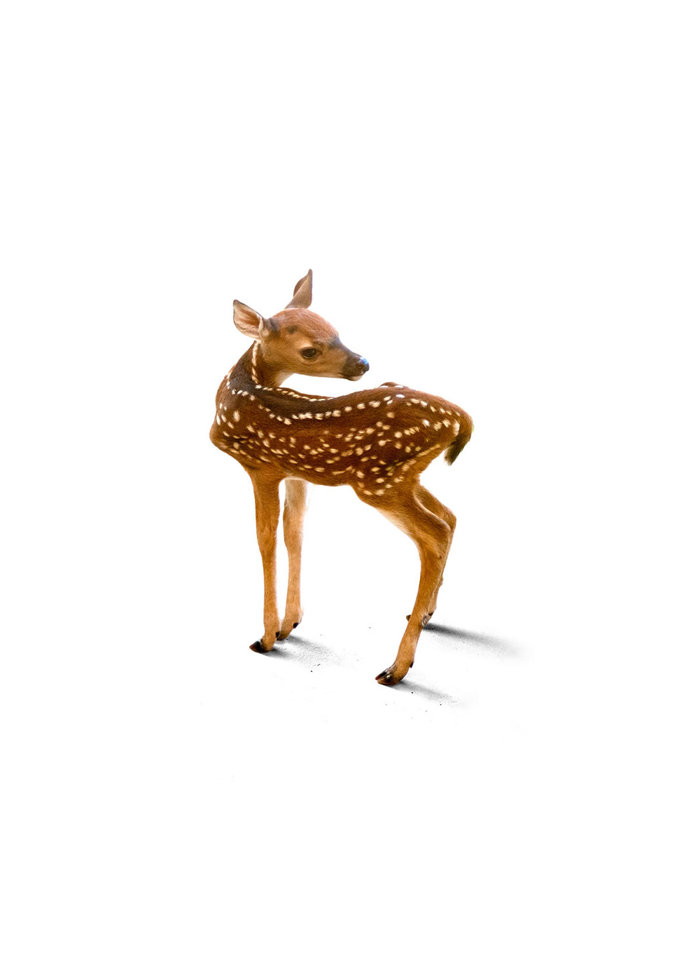 A Deer Friend
