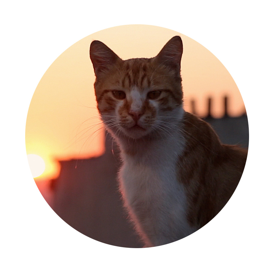 """Meow. Meow.   Purring   my way into   film 18, KEDI (D/S Ceyda Torun)  . Lead on, Kamil and Gamsiz. """" Kedi  is not a documentary about house cats or the strays you occasionally see in your back yard. Kedi is a film about the hundreds of thousands of cats who have roamed the metropolis of Istanbul freely for thousands of years, wandering in and out of people's lives, impacting them in ways only an animal who lives between the worlds of the wild and the tamed can. Cats and their kittens bring joy and purpose to those they choose, giving people an opportunity to reflect on life and their place in it. In Istanbul, cats are the mirrors to ourselves."""" (  Kedi  )"""