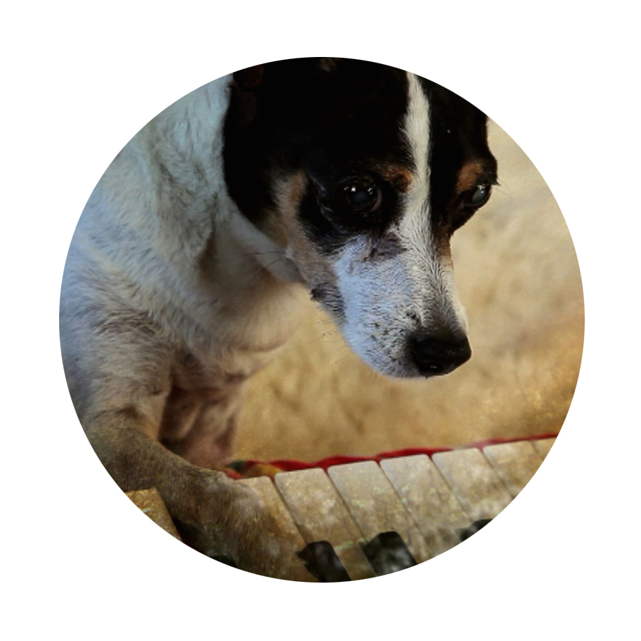 """A lament to a ratter. A tribute to a companion, dear Lolabelle. And Lou Reed too. A film about empathy. At the keys.   Film 33 has to be HEART OF A DOG (D/S Laurie Anderson)  . """"Every time we tell a story, we forget it more."""""""