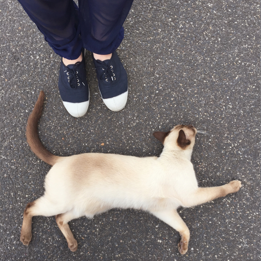 Tiny  Tonkinese cloud-runner , stealing the hearts of the passing foot brigade.