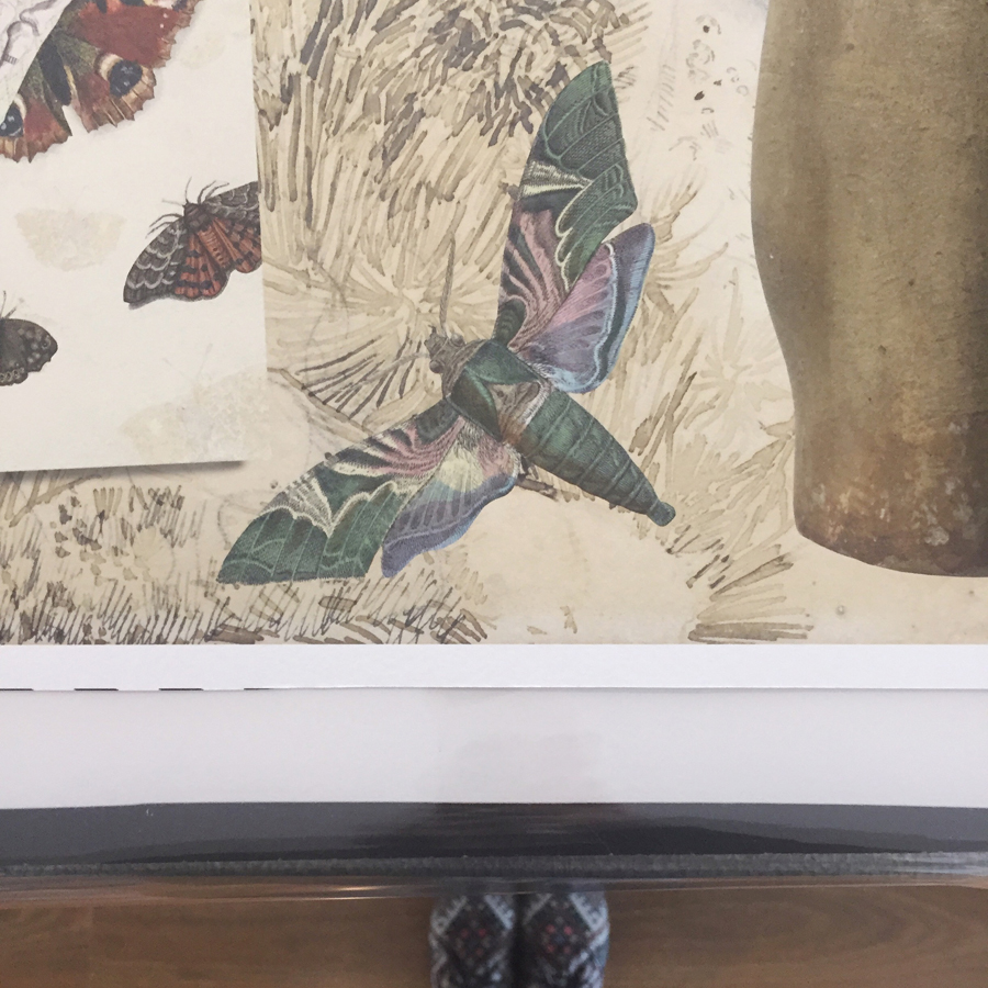 When the prints are as long as you are tall , moths and other components appear massive. Massive, and glorious. (Checking out our printing at  @arten_framing  for  #GraciaLouiseLooped  at  @library_vic  this August. This is getting exciting.)