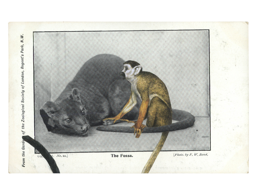 Gracia Haby,  Make-believe sat vigilant in the small enclosure , 2012, postcard collage