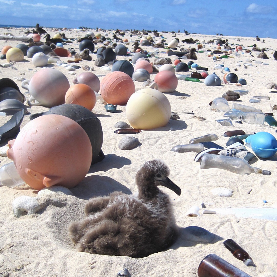 'Albatross chicks on the beach' (detail), NOAA, from 'The Trash at the Edge of the World: Removing 100,000 lbs of plastic and debris'