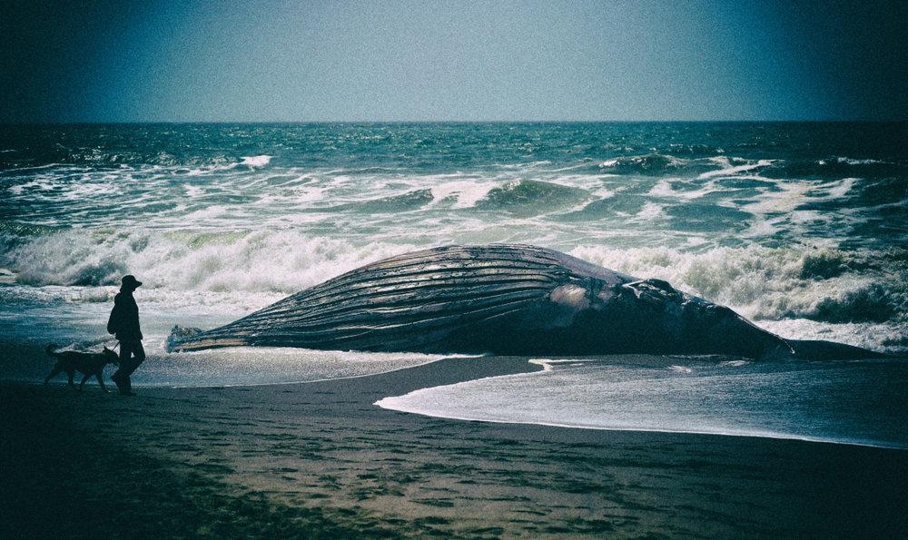 stranded-whale.jpg