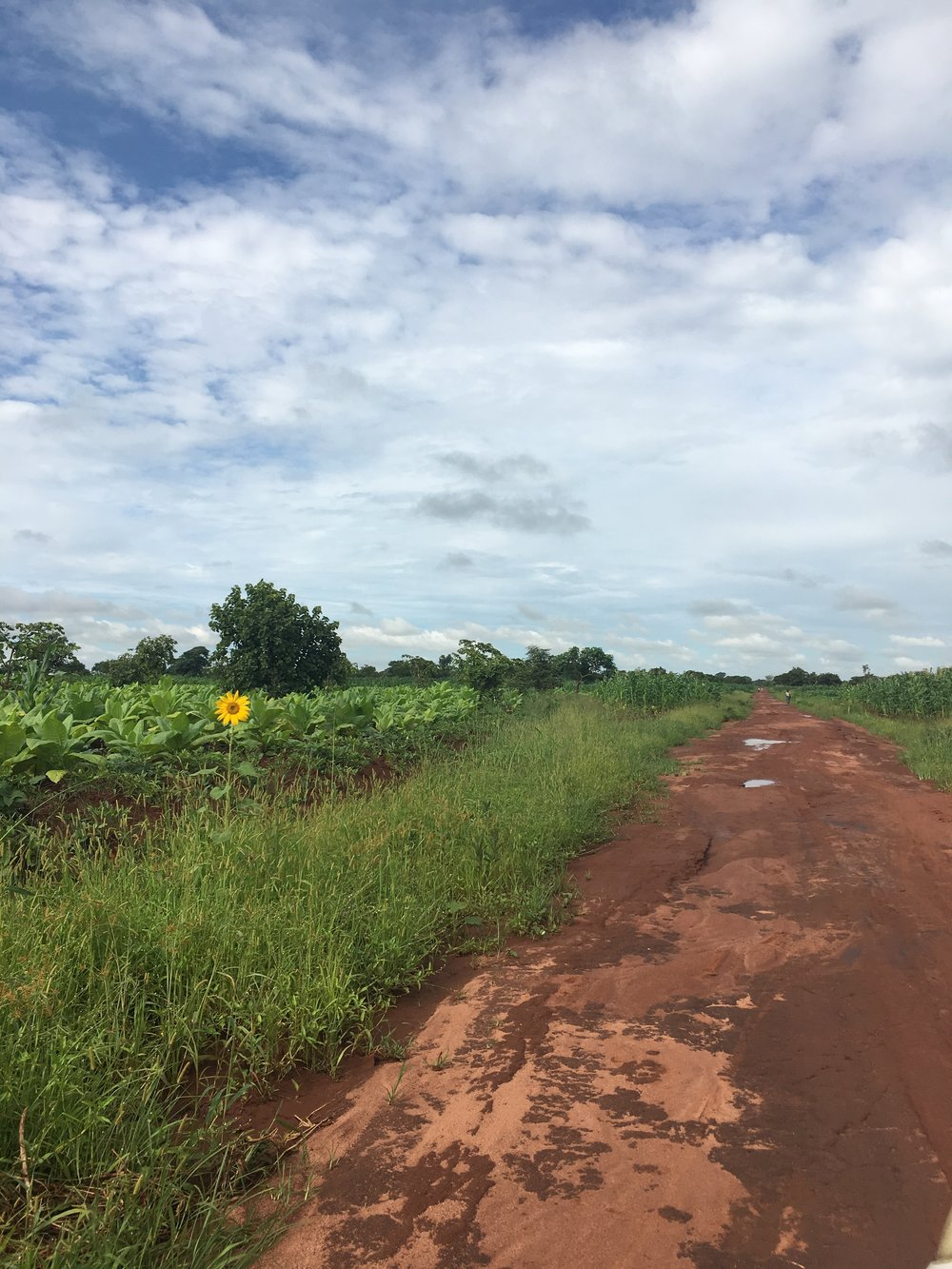 The road to Nambuma Health Center.