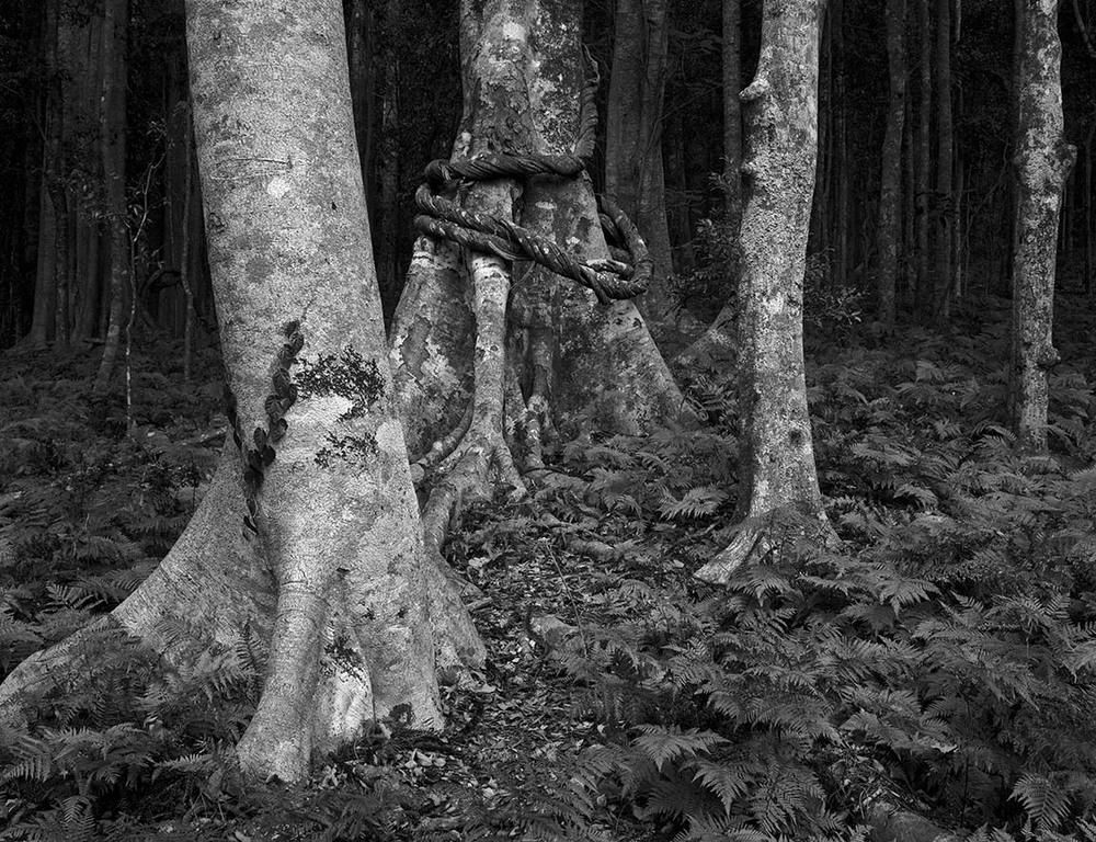 Bunya forest.jpg