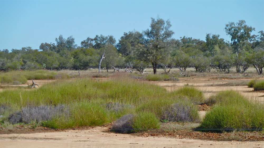 Yelarbon Desert Spinifex country