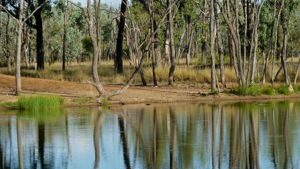 Milky Dam, Bimblebox Nature Refuge, near Alpha, Central Queensland