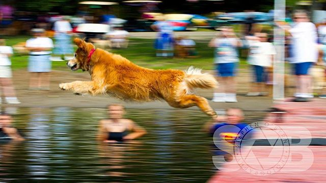 Dock diving. ___________________________ #dockdiving #goldenretriever #goldensofig #sobphotography #goldenretriever360 #dog #goldenretriever #goldstockcamp #canon #canonforum #dogphotography #dogsofinstagram #travelingwithdog
