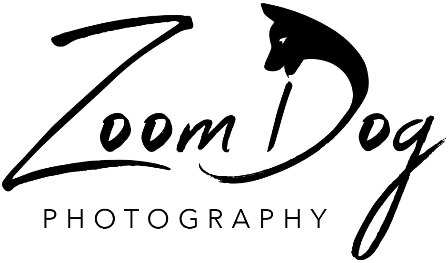 Zoom Dog Photography