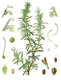 Promoted for its anti-inflammatory qualities & ability to relieve pain. It's used widely to treat headaches, muscle pains, and arthritis.