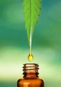 Difference between CBD & Hemp oil:  CBD oil is derived from hemp stalk/stem or industrial hemp.  Hemp oil on the other hand is chiefly derived from hemp seeds and contains a large quantity of cannabinoids but it is not CBD oil and has a small amount of THC along with CBD.