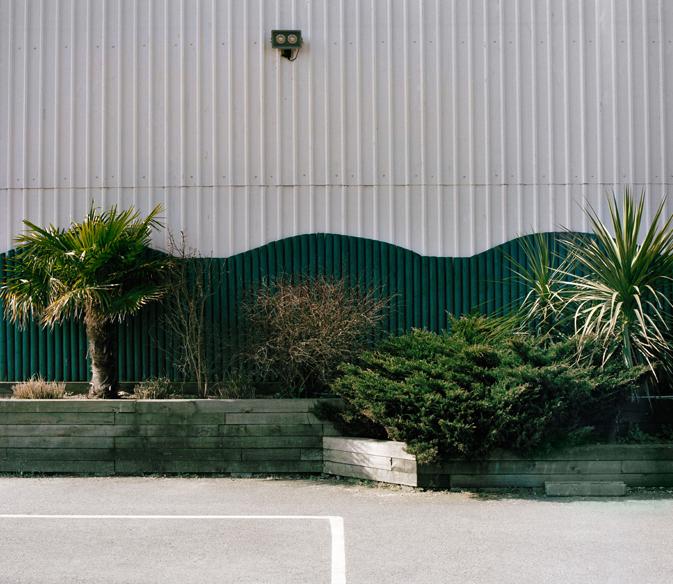 Luisa_Avietti. Tree Wall.jpg