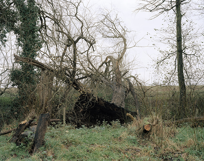 website_fallen_tree.jpg