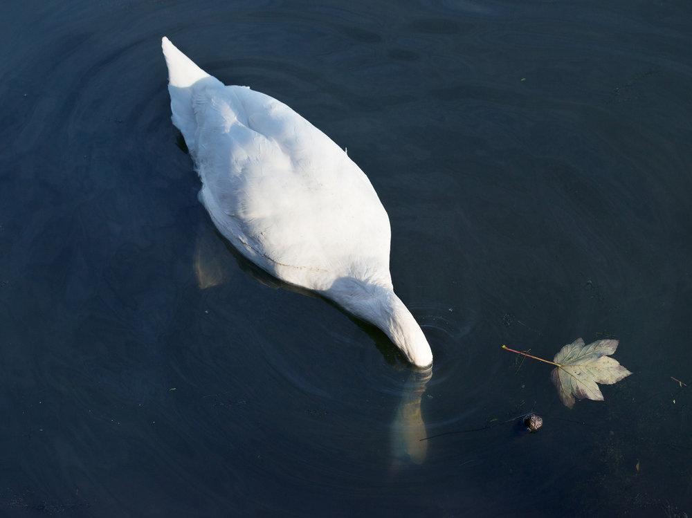 Hackney_Canal_FREYA-NAJADE-2.jpg