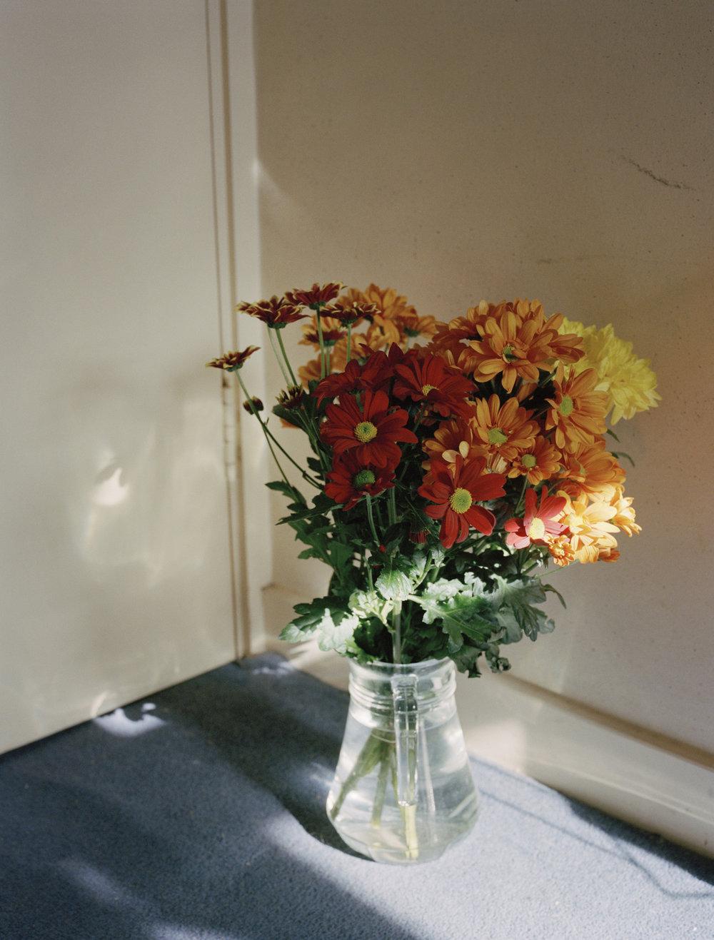 daisies_small.jpg
