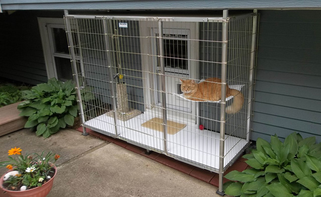 Cat enclosures petco pet gear deluxe crate ii reviews for Jackson galaxy petsmart