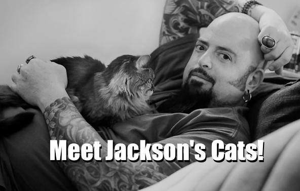 MeetJacksonsCats
