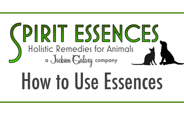 SE How To Use Essences