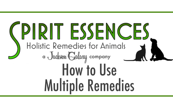 SE How To Use Multiple Remedies