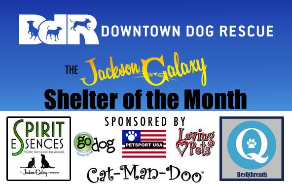 slider-Downtown Dog Rescue