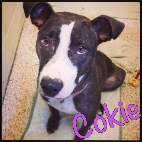 Cokie