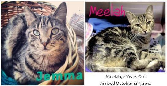 JemmaMeelah