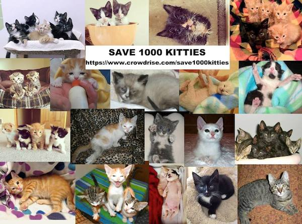 KittenRescue-collage