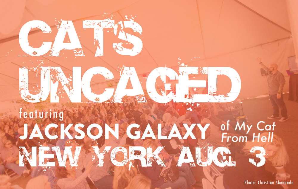 _blog Cats Uncaged New York Aug 3