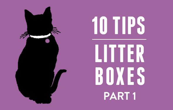 10 Litter Box Tips, Part 1